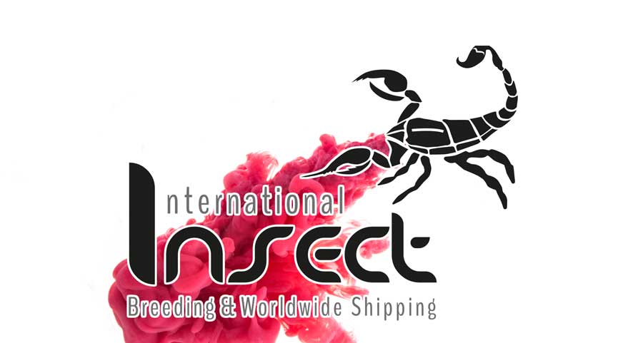 werbeagentur-neuss-logogestaltug-internationalinsect-gross-umstadt