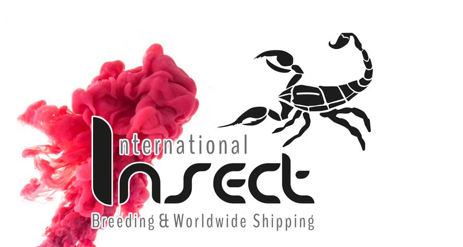werbeagentur neuss logogestaltug internationalinsect gross umstadt.2 - Grafikdesign & Printmedien