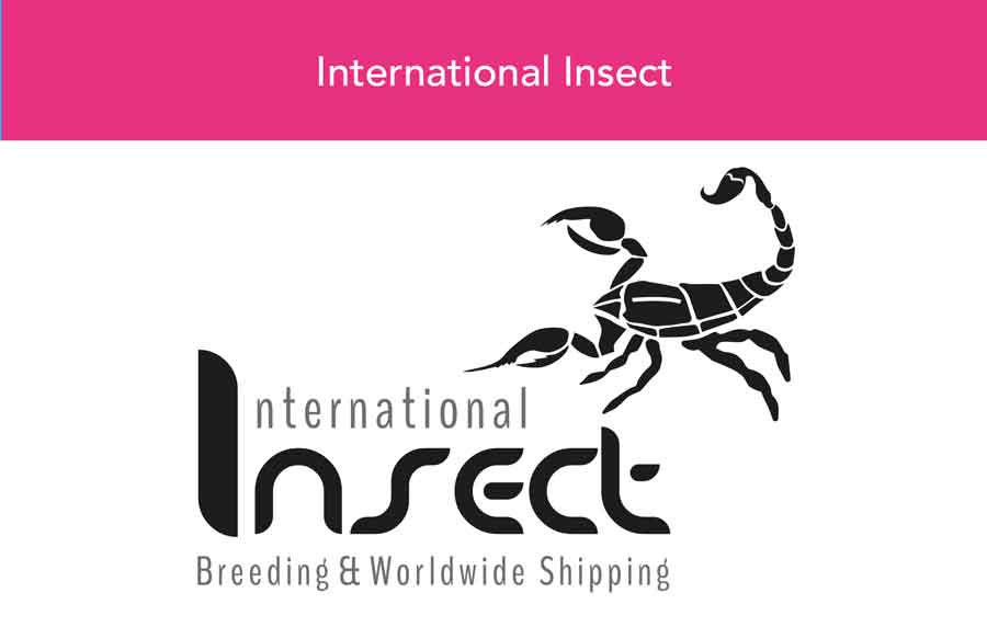 Grafikdesign - Logogestaltung, logo design international insect, Coperate Design, Individuelles Design, Kreatives Design